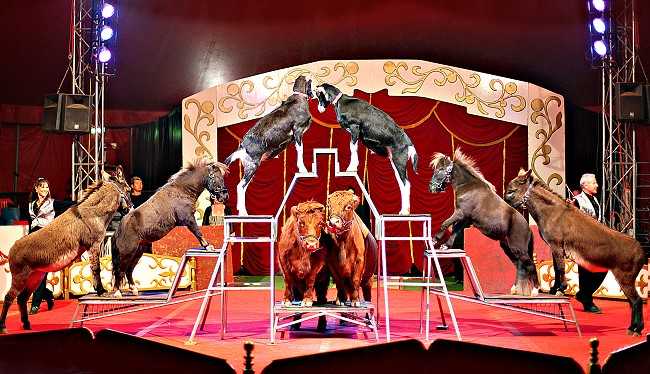 Have You Joined the Circus?