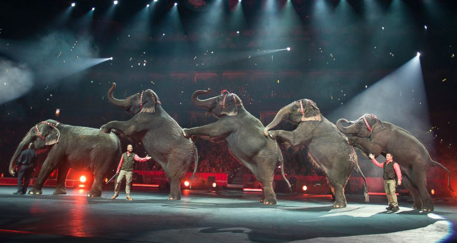 Welcome to the Greatest Show on Earth — The Rhino Brothers, Obama & Clinton Circus