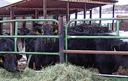 Ranchers urge permanent repeal of 'Death Tax'