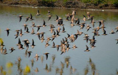 Interior Determines Migratory Bird Treaty Act Does Not Prohibit Incidental Take of Birds