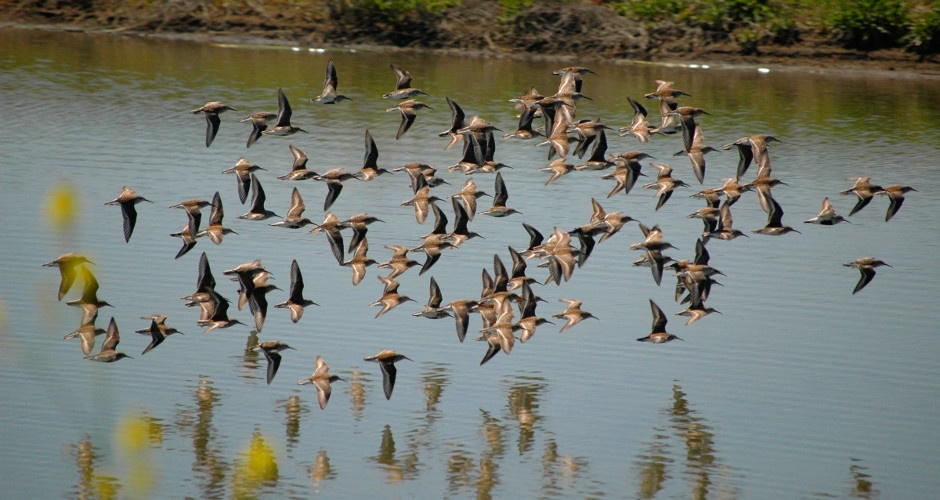 Interior Determines Migratory Bird Treaty Act Does Not Prohibit Incidental Take of Birds