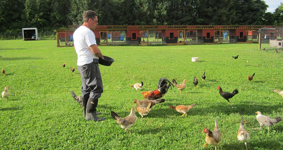 Feds, ASPCA raid lawful farm of rare Game Fowl breeder
