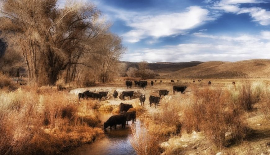 Rangeland Strategies: Helping ranchers beat the government at its own game