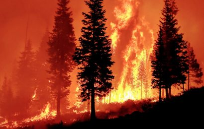Forest Service takes credit for small thinning projects, shrugs off decades of disastrous wildfires