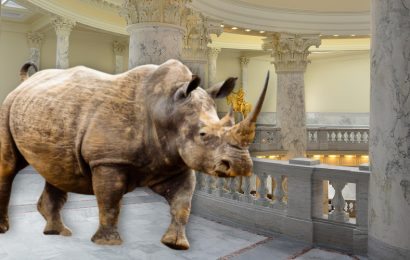 RINOs on the Loose in the Idaho Legislature