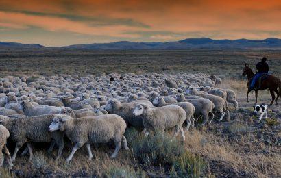 Idaho Legislators & Citizens Beware