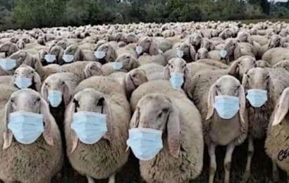 Sheep Rancher Fleeces Idaho's Economy